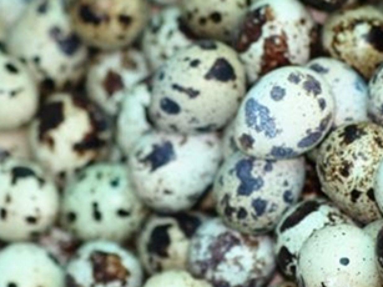Trucos Chefsins: pochar huevos de codorniz