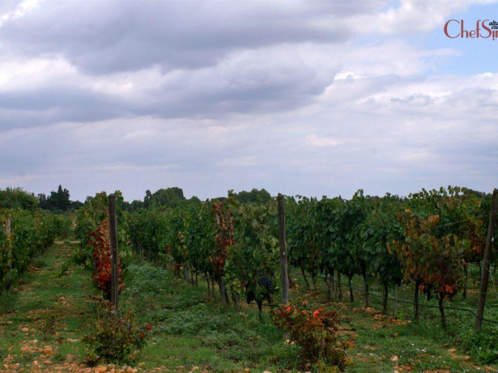 Biniagual, entre vinyes i oliveres